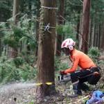 チェーンソーによる伐木作業